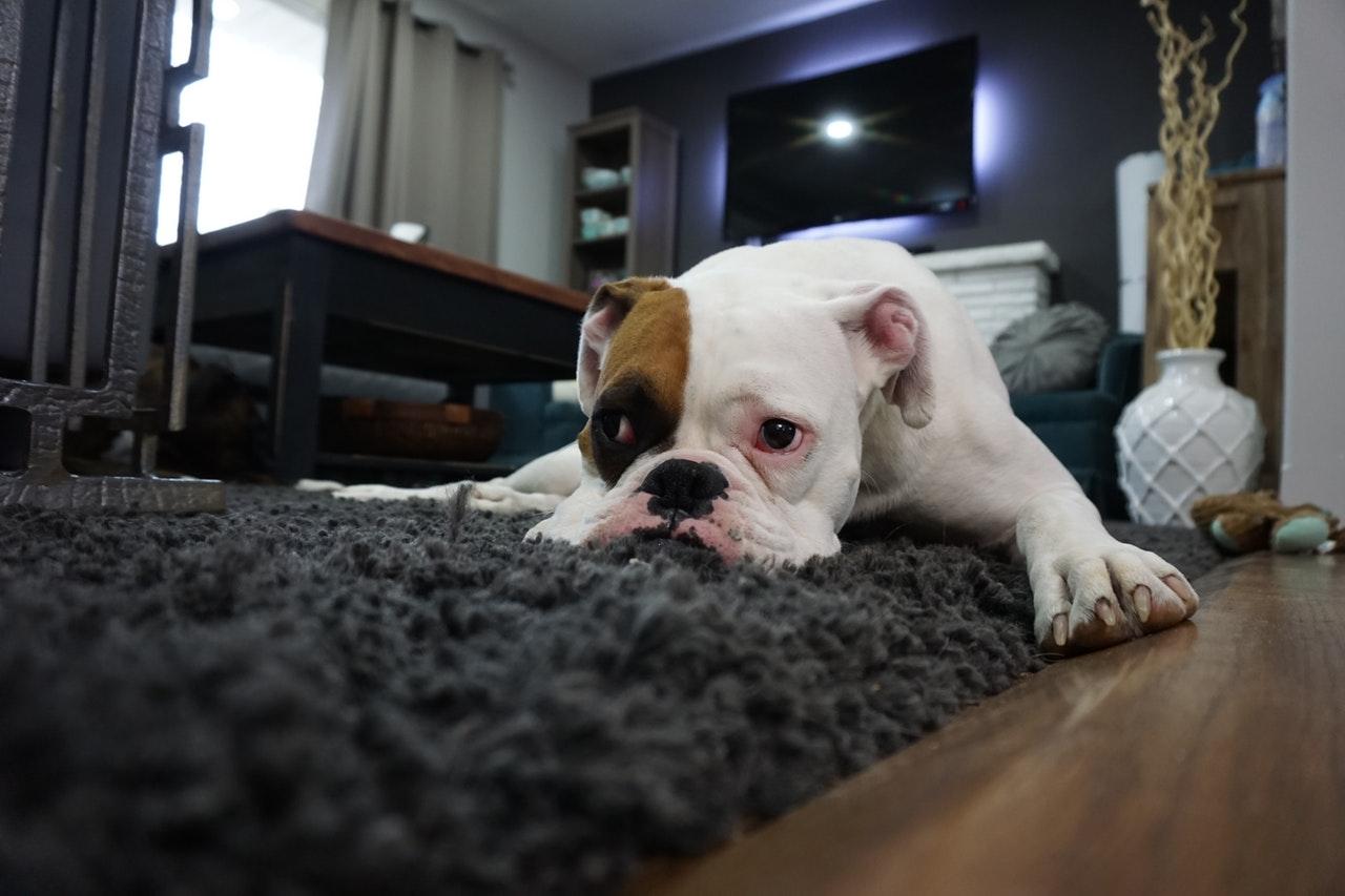 Wie lässt sich Teppichkleber entfernen? – 3 Tipps